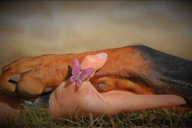 Integrative approach to our pets wellness